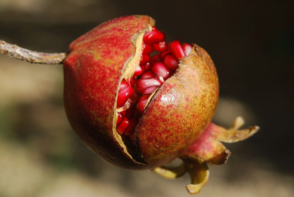Pomegranate by Lee Travathan