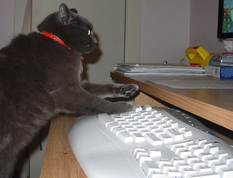 typing_cat_by_vickart1
